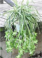 52CM 3pcs Lot Diy Artificial Plants Green Grass Plastic Simulation Plants Home Decoration Flower Spring Grass