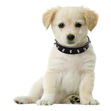 LDC002 Cool Rivets Studded Leather Pet Dog Collars for Pitbull