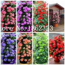 100 шт. восхождение бонсай герани бонсай редкие пятнистая Герань цветок бонсай, сад в горшке цветок для бонсай растения для сада