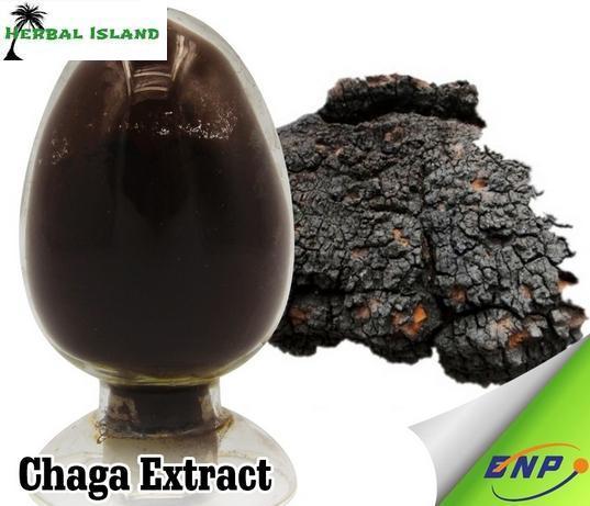 Siberian Chaga Mushroom 30 1 Extract Powder 500g Organic Polyose Extract