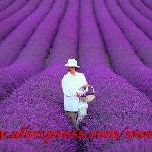 סגול Univalve גרניום זרעים זרעי פרחים - מוצרים גן