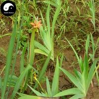 Buy Rhizoma Belamcandae Seeds 200pcs Plant Blackberry Lily Grow She Gan Herb