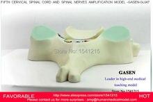 FIFTH CERVICAL VERTEBRA SPINAL CORD SPINAL NERVE MODEL CERVICAL MODEL VERTEBRAL ARTERY VERTEBRAL VEIN MODEL MODEL GASEN-GL047