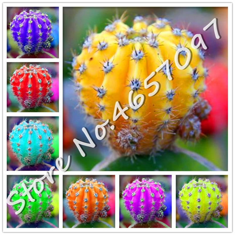Bonsai 200 Pcs Rare Mini Cactus Living Stones Flower Mix Lithops Succulent Bonsai Plants For Home Garden Decoration Supplies