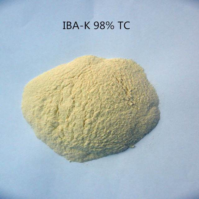30g indole-3-butyric acid potassium IBA-K water soluble 3-Indolebutyric Acid potassium 98% IBA Salt/IBA Auxin with low pric