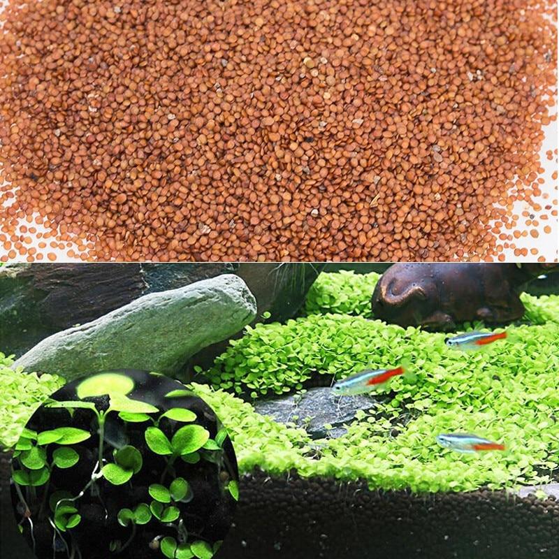 Water Grass Seed Aquarium Aquatic Plants Seeds Easy Planting Fish Tank Landscape Ornament Lawn Decor 3