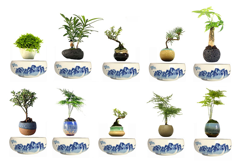 ... levvitate ... magnetic levitation planter - high-quality ceramics - levitating planter rotates and floats