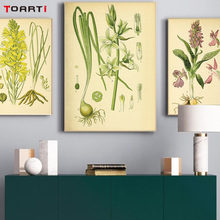 Vintage Botanical illustrations floral poster&print canvas painting living room decor modular picture mural chart  Plant specime