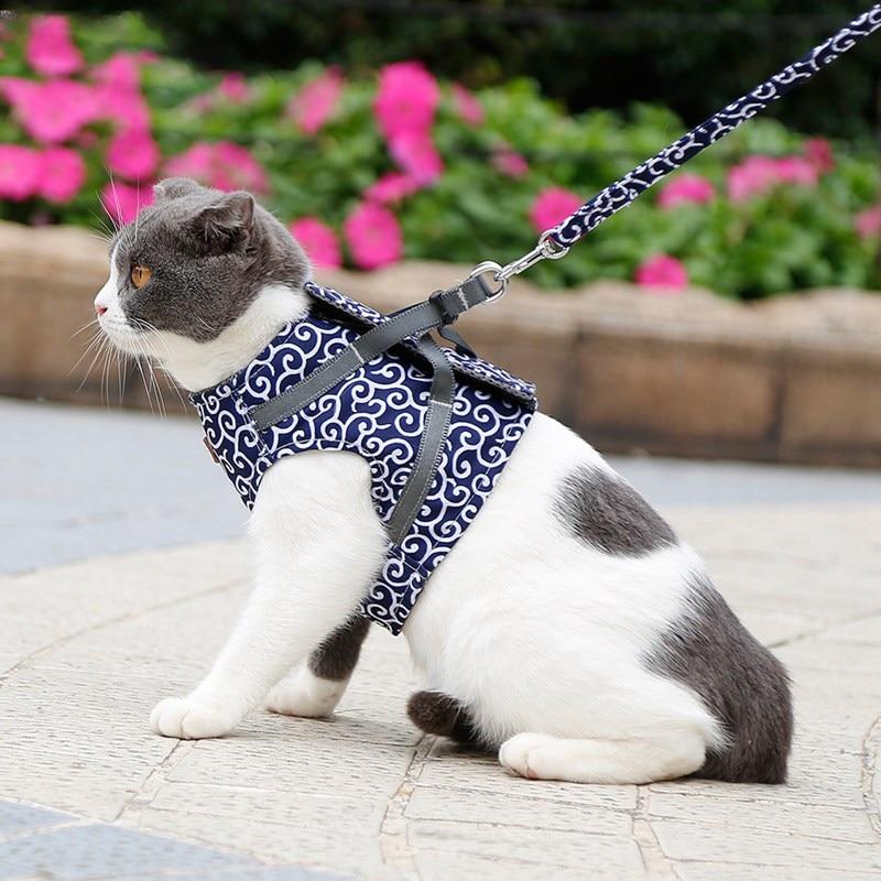 поводок на кошке картинки