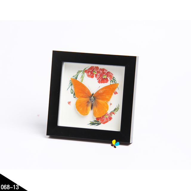 40 40 Framed Real Butterfly Insects Dragonfly Shadow Box Home Simple How To Decorate Shadow Boxes