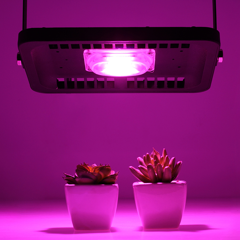 LED Grow Light Full Spectrum Floodlight 30W 50W 100W 110V220V COB Chip For Indoor Outdoor Hydroponice Plant Seedling Growth Lamp