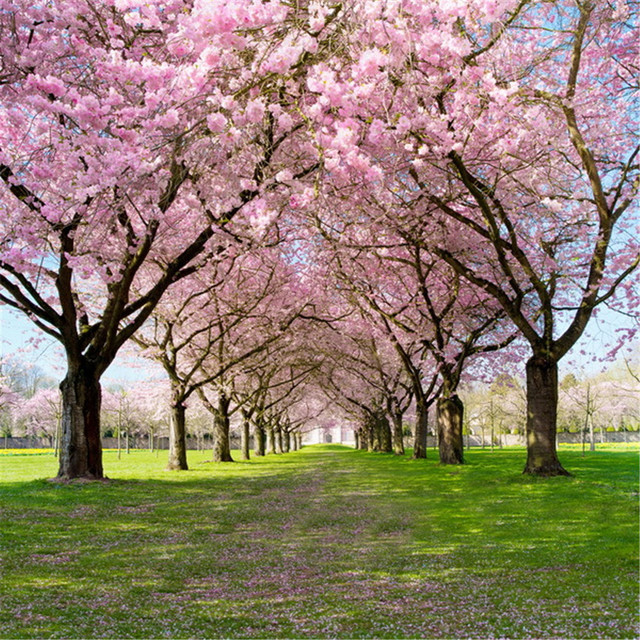 Cherry Blossom Tree Backdrops Photography Printed Spring