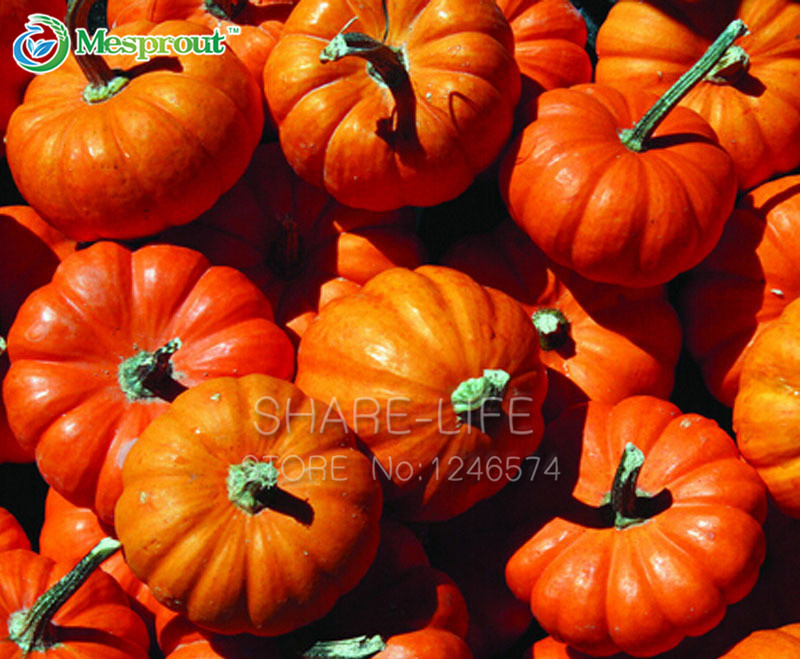 is a pumpkin a fruit or vegetable fruit delivery