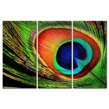 3 Pcs/Set  Peacock Feather Wall Art Home Decoration Modern Painting Canvas Picture
