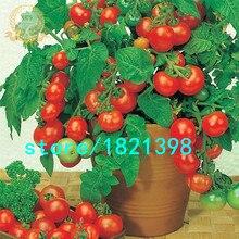 Бонсай Горшках семена Томатов Мини Вишня Сладкие Фрукты Овощи Органических Свежие 300 ШТ.