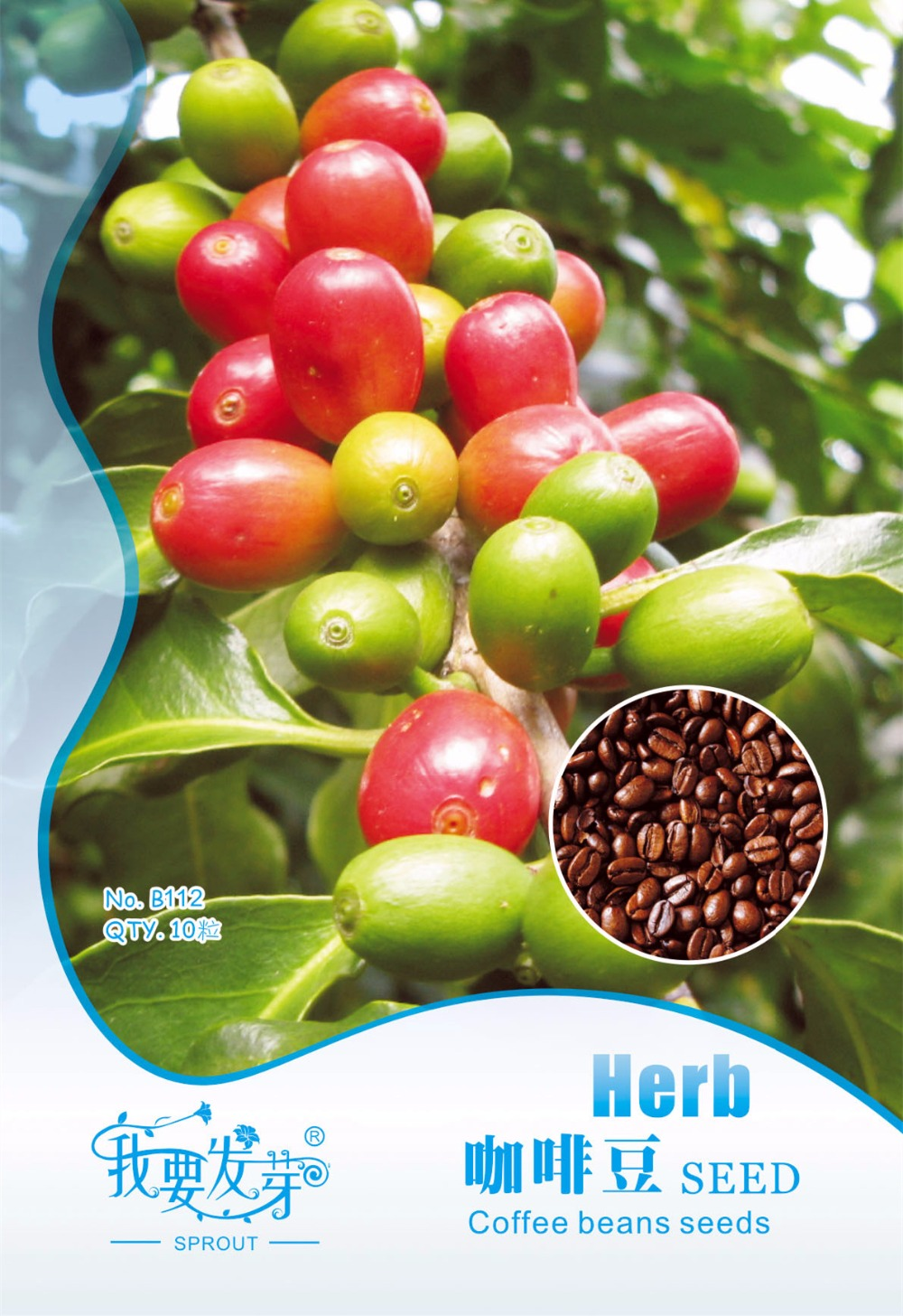 Coffee beans seed, imported organic Coffee Cherry balcony pot, I want to sprout Original package melon, 10 particles/pack
