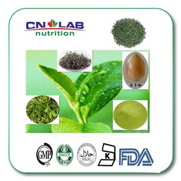 Pure Bio Green Tea Extract Powder Benefits with Competitive Price 500gram highest pure shiitake mushroom extract powder lentinula edodes 30