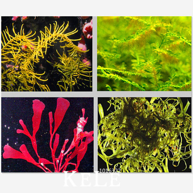 Mixed Aquarium Grass Seeds, 100pcs/pack