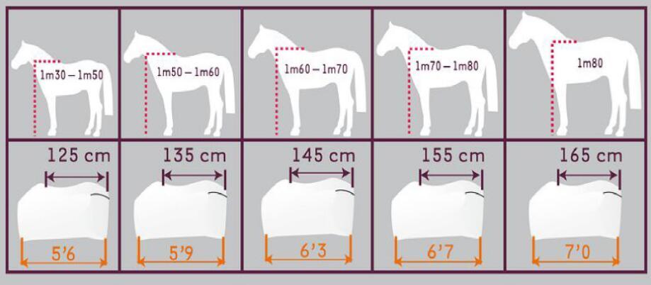 horse back length