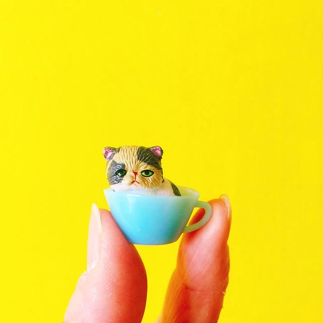 śliczne Kitty W Kubekorangezielonyniebieskiminiaturypiękny Kot