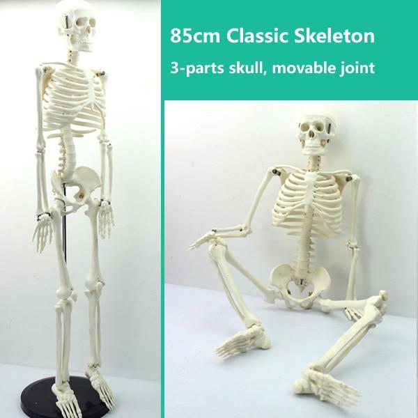 CMAM-SKELETON06 Half Size 85cm Human Skeleton Model,  Medical Science Educational Teaching Anatomical Models iso high quality human skeleton model life size medical 180cm human skeleton