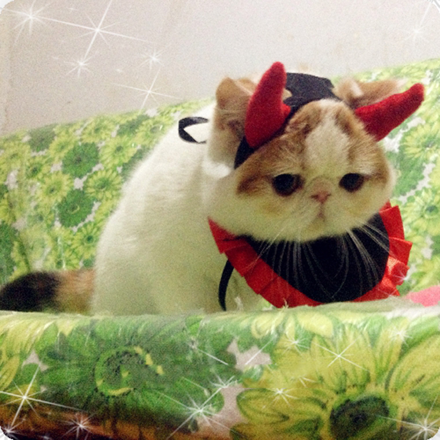 Funny Pet Costume Clothes Cats Wear Clothes Nurses Clothing Cat Malchivov Kostuums VOOR Katten Pet Costumes QQM1922-in Cat Clothing from Home u0026 Garden on ... & Funny Pet Costume Clothes Cats Wear Clothes Nurses Clothing Cat ...