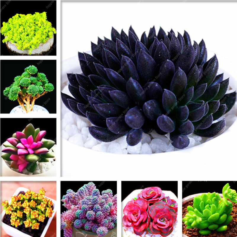 200 pcs Mix Succulent Bonsai lotus Lithops Pseudotruncatella Bonsai ประดับพืชสำหรับ home & garden กระถางดอกไม้ planters