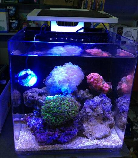 ZET lumière Aquarium 25cm total 10W mer marine corail SPS LPS réservoir lumière LED-in Lightings from Maison & Animalerie    1