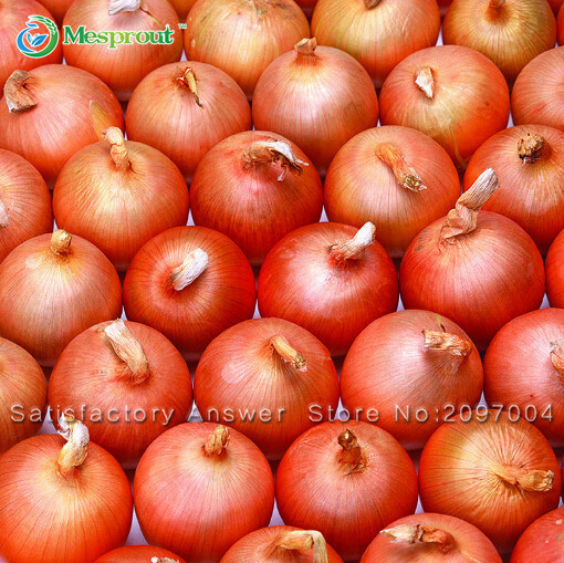 Новый Горячий Вкусный 100 шт. Гигантские Лука Семена Органические Овощи
