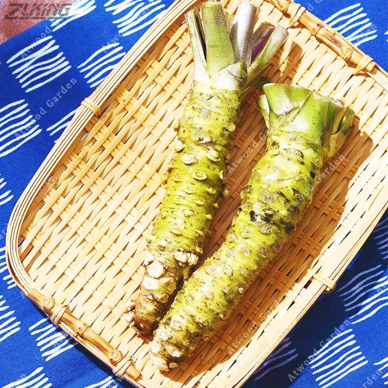 300 Pcs Seeds Horseradish Vegetable Wasabia Japonica Home Garden Bonsai Plants N