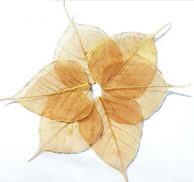 50pcs 4 8cm Dried Natural Gold Pul Bo Tree Large Leaf Leaves