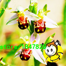 Rare Bee Orchid Flower Seeds Orchid Seeds Smile Interesting Plants Potted Plants Garden Flowers 100PCS Free Shipping