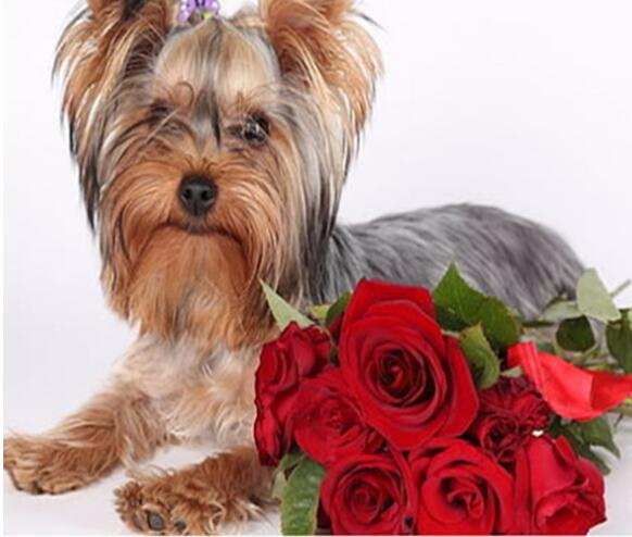 Rhinestones Cross Stitch Yorkshire Terrier Dog Rose New Full 5d Diy Diamond Painting Mosaic Embroidery Household Decoration