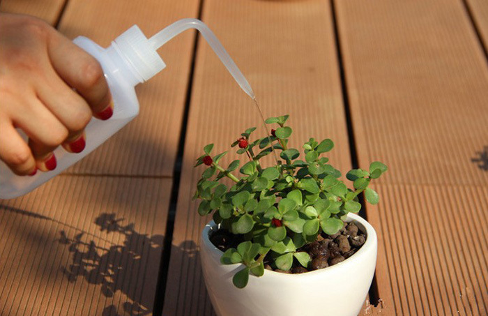 New Gardening tools 250ml extrusion water cans mini landscape bottle garden  fairy garden miniatures for home. Online Buy Wholesale miniature gardening tools from China