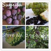 Rare-20-pcs-bag-Sugar-Apple-seeds-ANNONA-SQUAMOSA-Apple-Custard-Apple-Tree-delicious-Fruit-Seeds.jpg_200x200