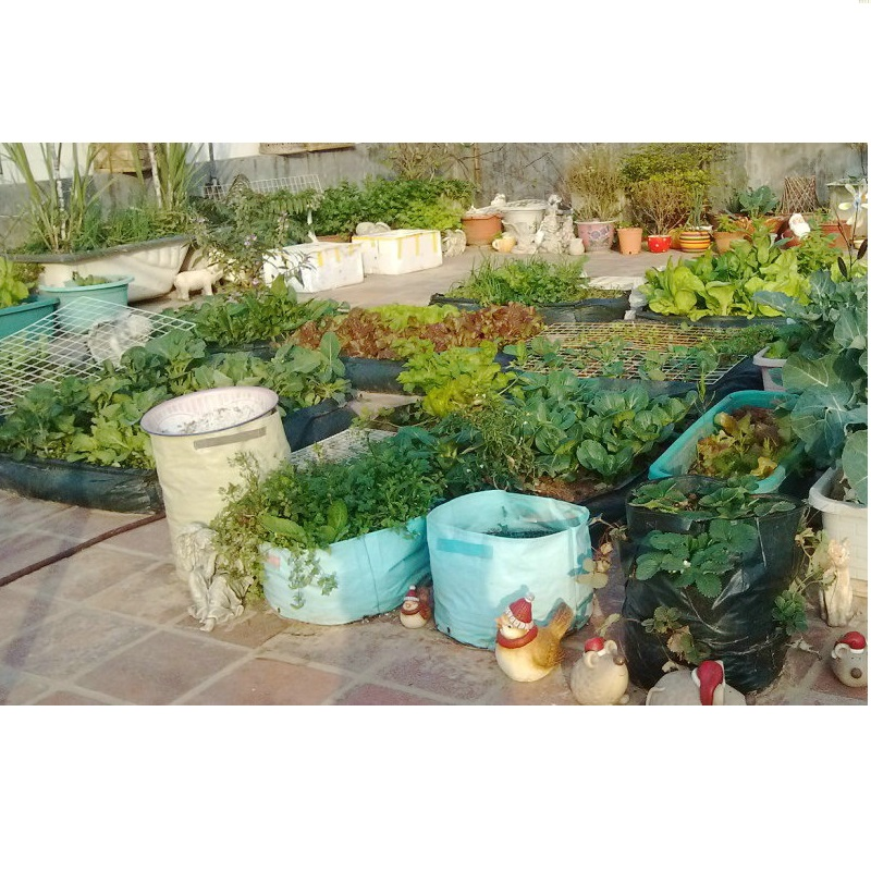 35x45cm New Potato Planting PE Bags Cultivation Garden Pots Planters Vegetable Planting Bags Grow Bags Farm Balcony Home Garden (5)