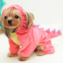 Cute Yorkie Costumes (several designs)
