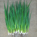 100pcs/bag small green onion Organic heirloom vegetables, heathy Kitchen cooking food plant pot or bonsai