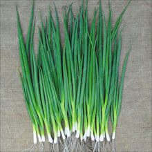100pcs/bag small green onion seeds, Organic heirloom seeds vegetables, heathy Kitchen cooking food plant pot or bonsai seeds