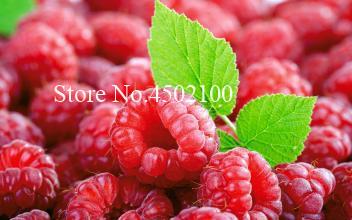 Raspberry Seeds (1000 Pieces)