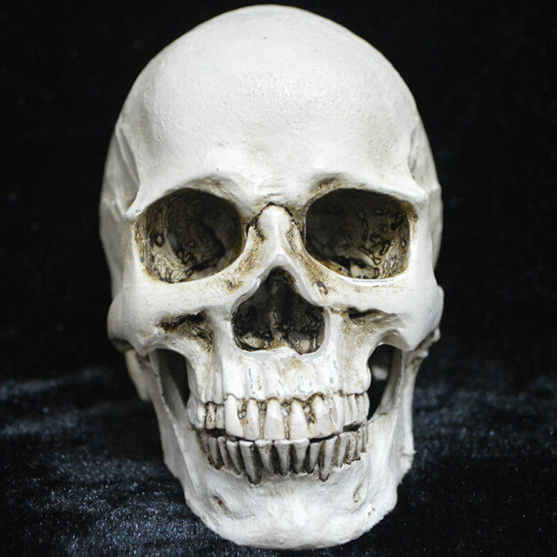 aliexpresscom buy small plastic resin halloween skull decorations holiday props realistic skull model toys haunted house halloween party yard from - Halloween Skull Decorations