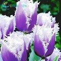 10 unids/bolsa plantas de tulipanes raro bonsái plantas de flores helado como hermosos tulipanes en maceta perenne casa jardines tulipanes Pantalones