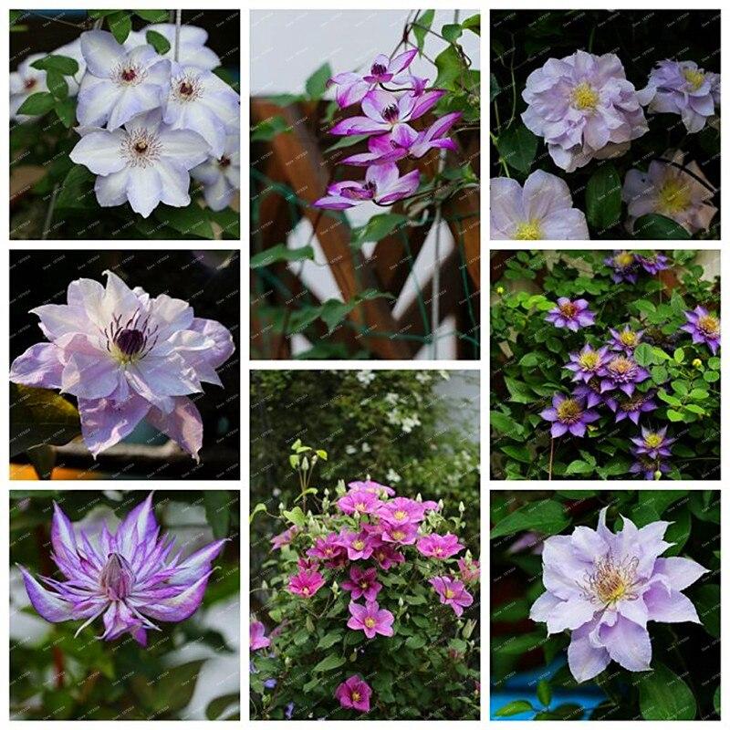 Редкие садовые цветы многолетники