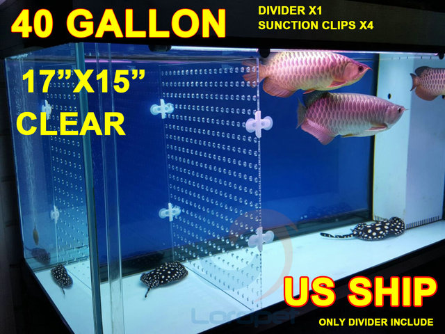 Aquarium clear acrylic divider holes thick for Where to buy fish online