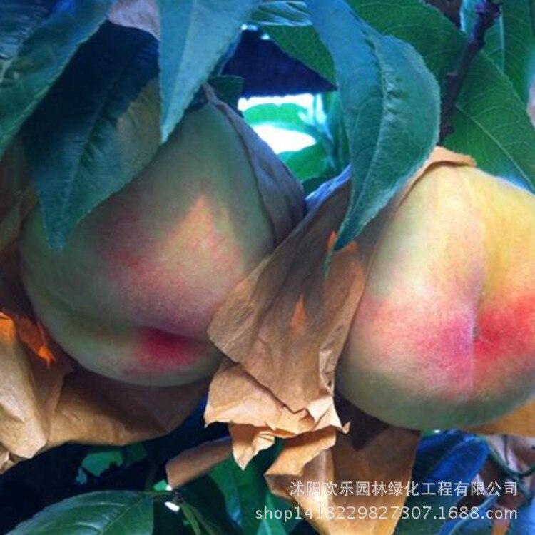 nami hot naked