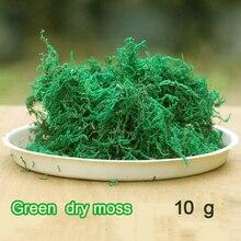 10 г зеленый сухой мох увлажняющее питание органическое удобрение защита растений DIY цветочный горшок домашний сад бонсай украшение