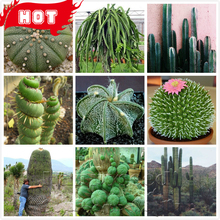 2016 Hot Sale!!! 500 Rare Cactus Seeds Mixed Succulent tree pot Plant Purify Air Bonsai Resistant Heat For Mini Garden  + Gifts