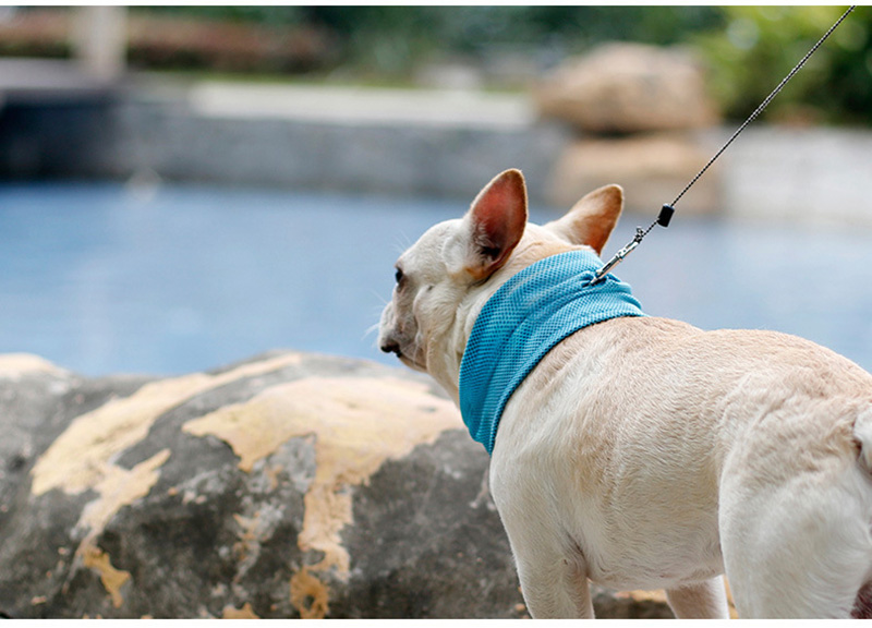 dog collar for small dogs