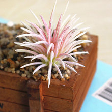 1pc Simulation Plant Home Office Spring Garden Artificial Plants Succulents Hollow Grass Leaves Flocking Decoration Fake Flower