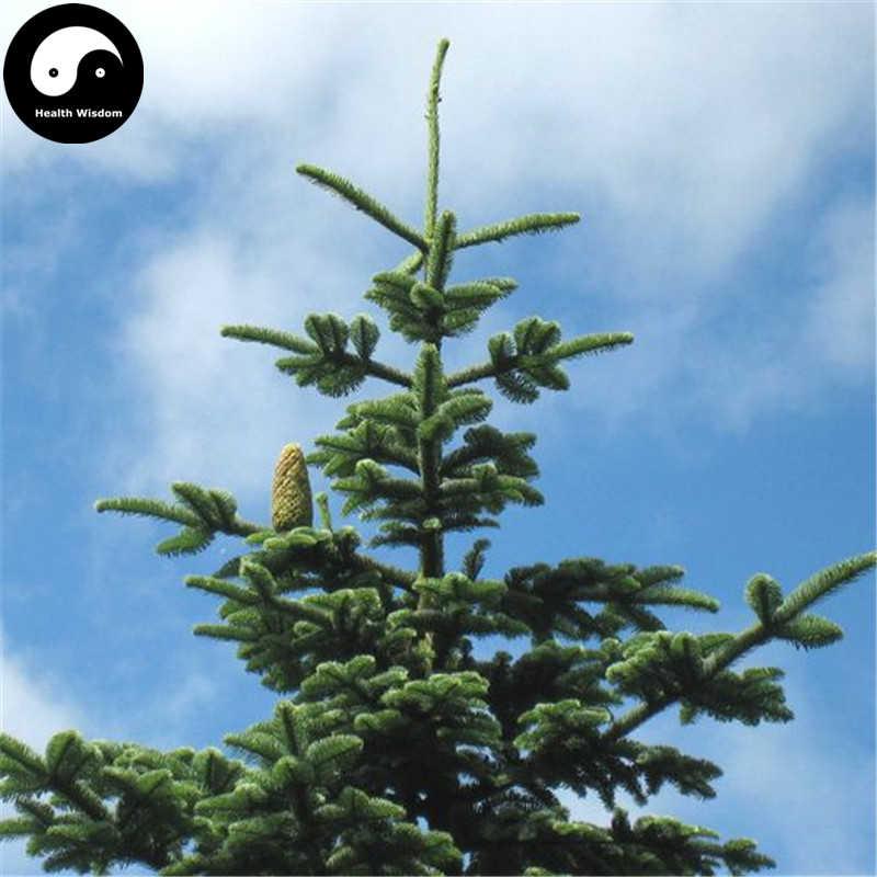 Detail Feedback Questions About Buy Abies Delavayi Fir Tree Semente